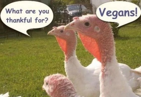 What are you thankful for? Vegans.